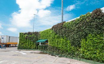 Muro Verde Clgante en Medellin