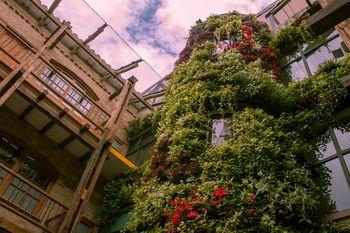Muros Verdes Medellín y Bogota