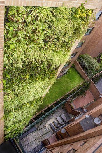 Muro Verde Colgante Colombia y Bogota