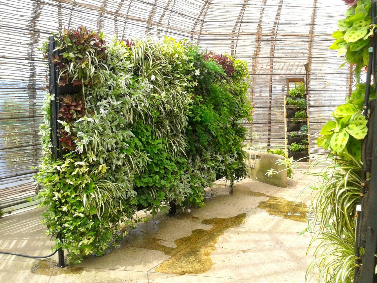 fabricacion de muros verdes para colombia y ecuador