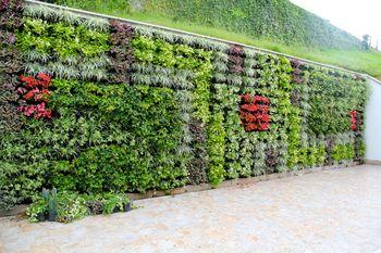 Muros Verdes Colgantes Bogota