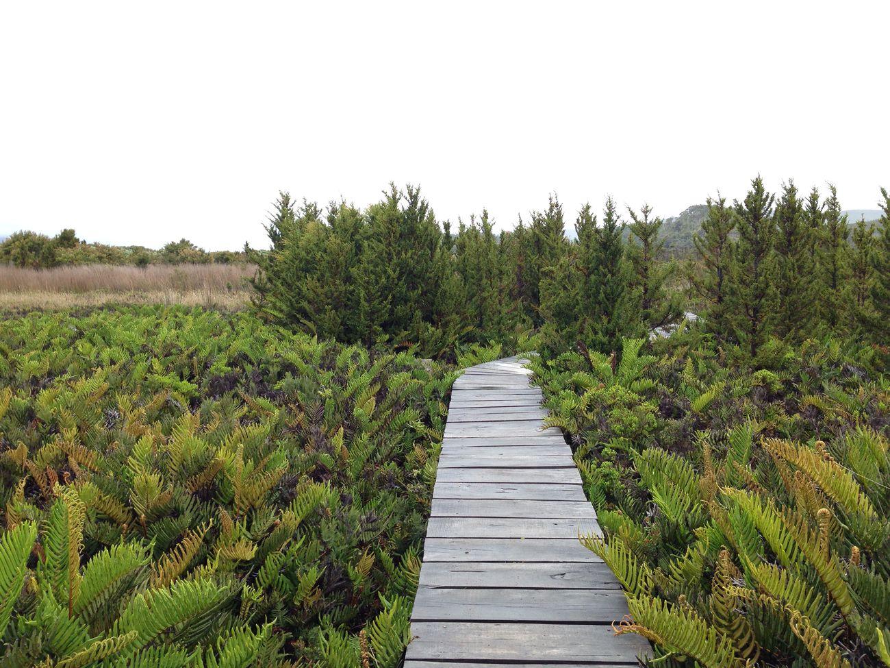 Paisajismo y Jardineria en Bogota. Diseño de jardines